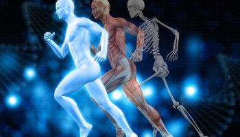 Imagem da Notícia Qual é a importância da atuação do fisiologista com atletas de alto rendimento?
